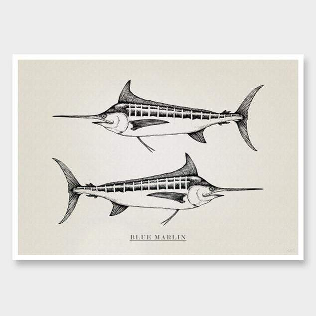 Blue Marlin Art Print by Nathan Miller
