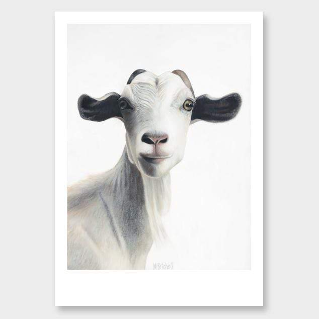 Morgan Goat Art Print by Margaret Petchell