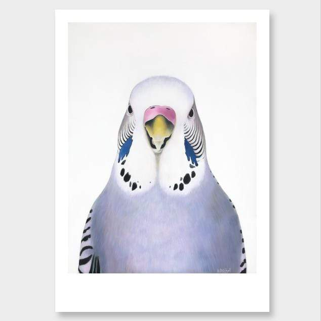 Sylvia Budgie Art Print by Margaret Petchell