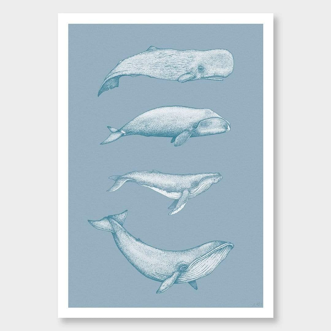Whale Species Blue Art Print by Nathan Miller