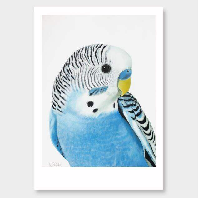 Wilbur Budgie Art Print by Margaret Petchell