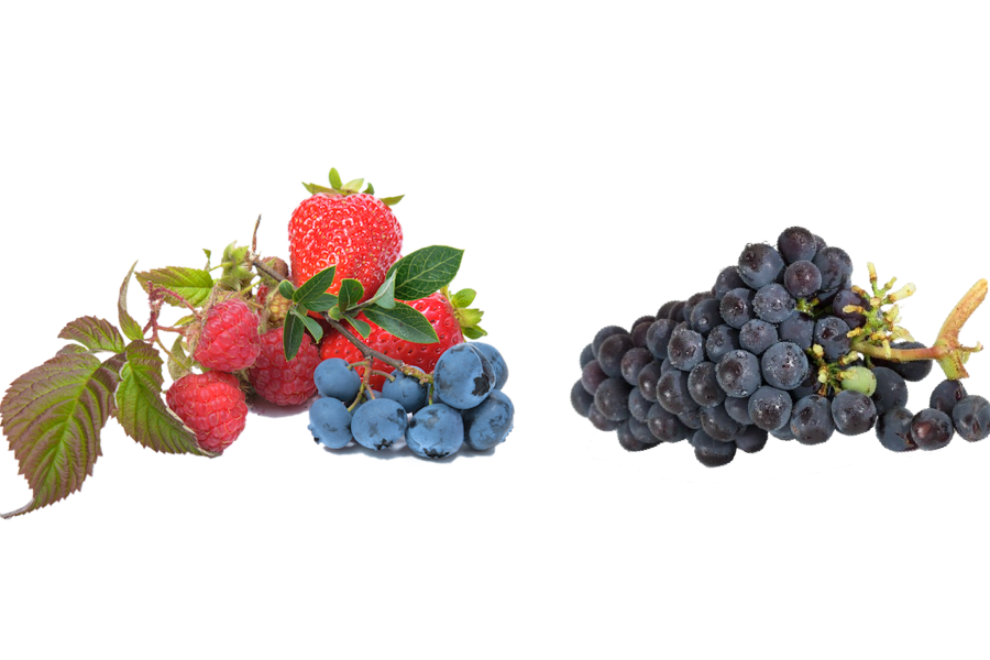 berries and grapes