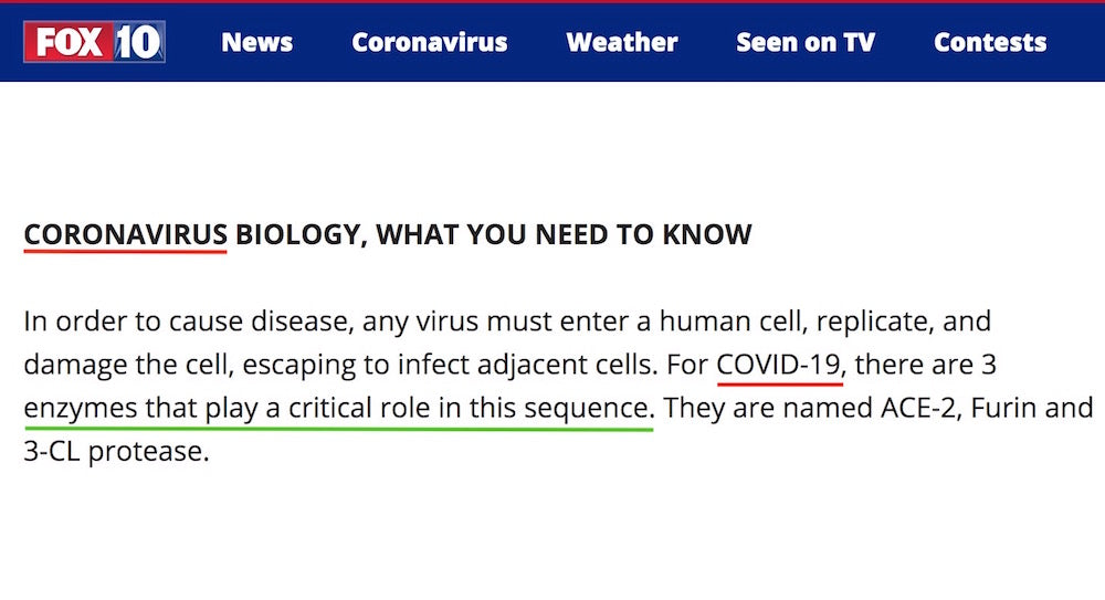 fox news article flavonoids doctor coronavirus protection