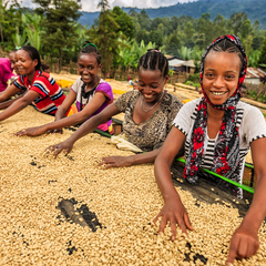 Ethiopia Limu Single Origin Coffee Beans