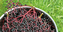 Load image into Gallery viewer, Elderberries