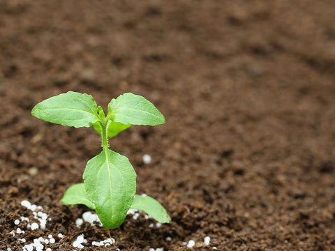 Small plant growing with fertilizer granules around it.