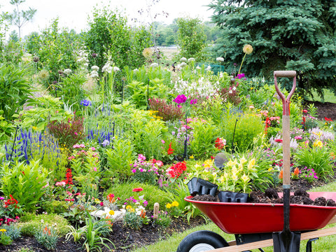 Garden with flowers and other plants, with a wheelbarrow and shovel nearby.