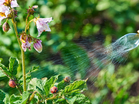 Flowers being watered.