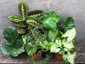 Lovely indoor plant bundle