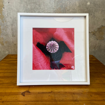 Red Poppies Framed Print - B