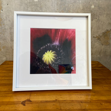 Red Poppies Framed Print - C