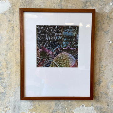 Botanical Print with Teak Frame - B