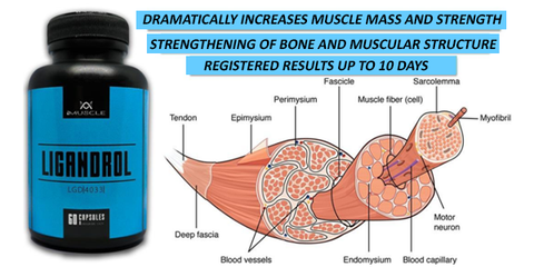 imuscle sarms - ligandrol muscle tissue