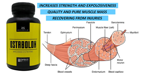 imuscle sarms - ostarine muscle tissue