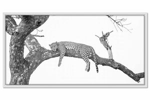 Framed Canvas South Africa Leopard