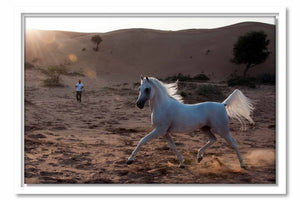 Framed Canvas Proud Arabian Horse