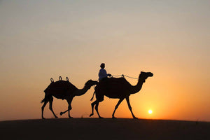 Arabian Sunset