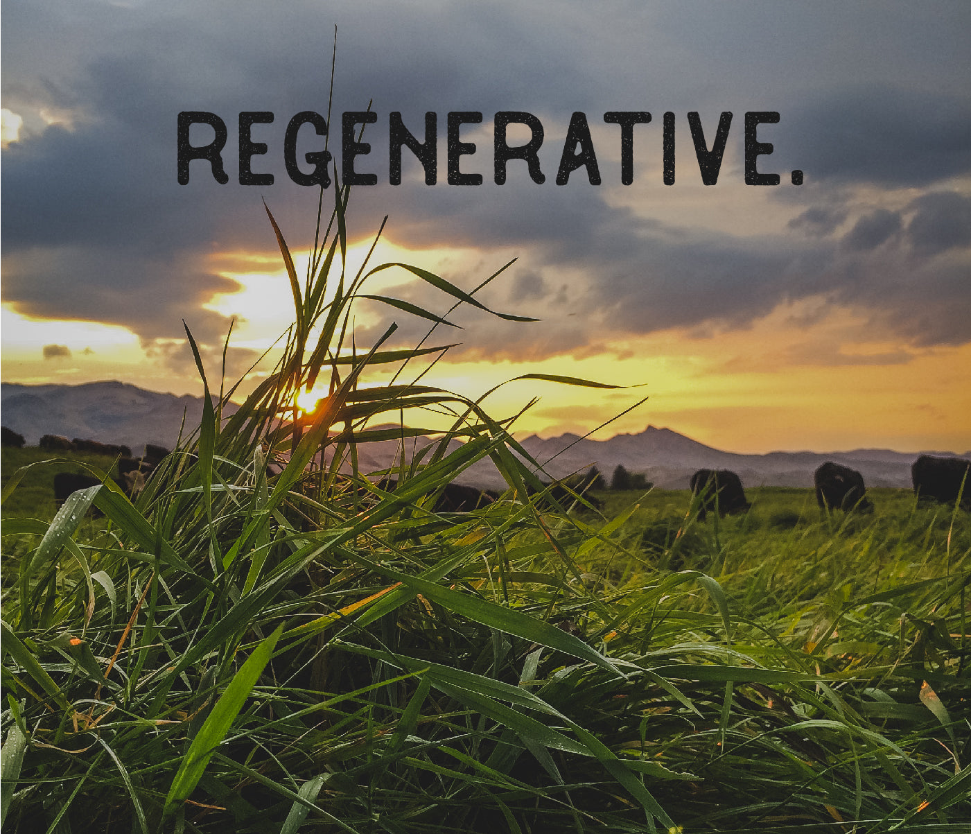 Regenerative Organic Grass Fed Beef