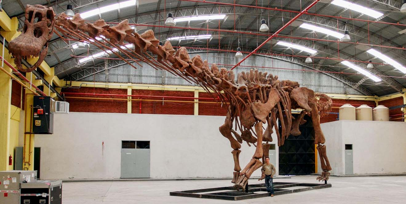 plus-grand-fossile-dinosaure-patagotitan