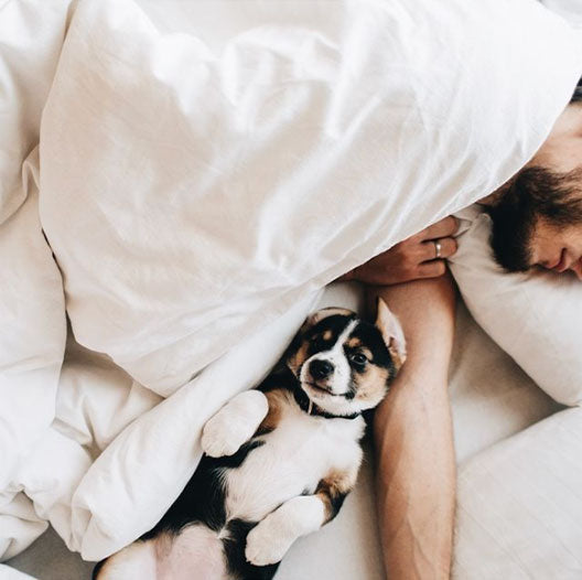 dog and man in bed sleeping