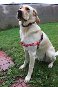 PetSafe Easy Walk Harness: Poppy