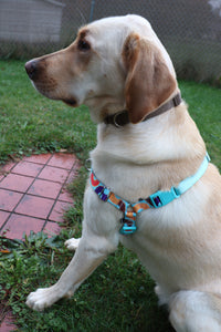 PetSafe Easy Walk Harness: Donuts
