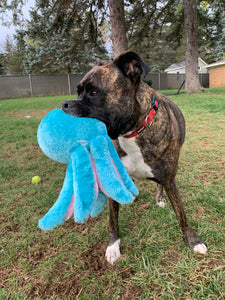 Oscar the Octopus Squeaky Dog Toy