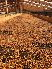 coffee drying process, honey, wet and natural process