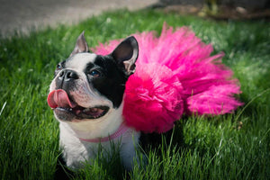 Hot Pink Dog Tutu Skirt | XS-XXXL