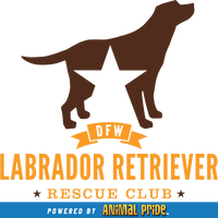 Dallas Fort Worth Labrador Retriever Rescue Club Store