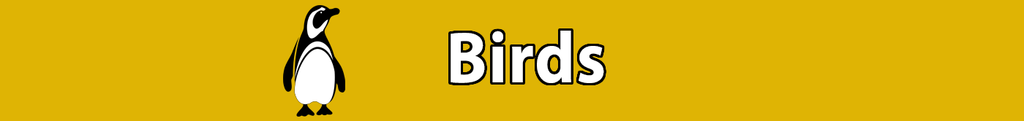 NEW Zoo Online Store - Birds