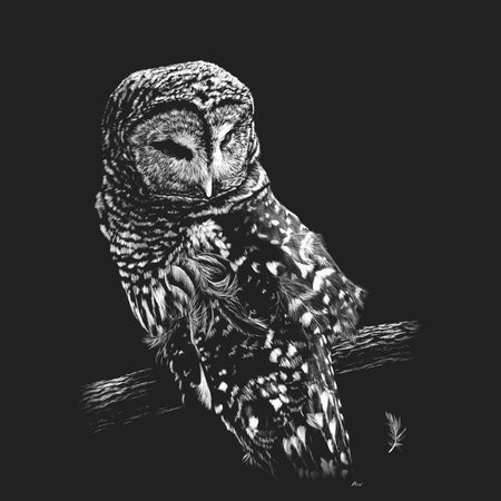 Barred Owl on Black - Adult Unisex T-Shirt