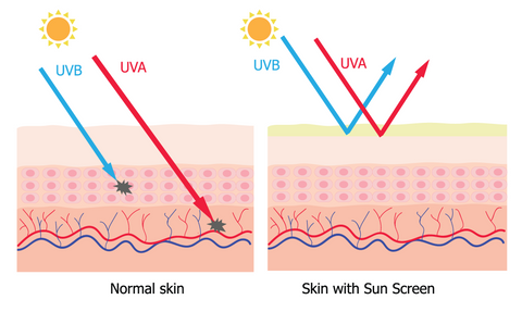 how uva and uvb penetrates skin without sunscreen
