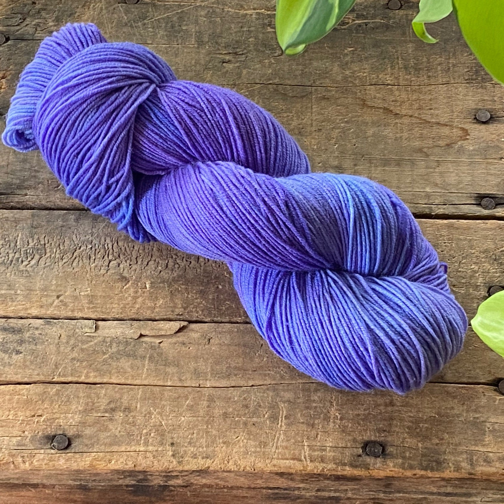 Delphiniums Dabble Ultrasock
