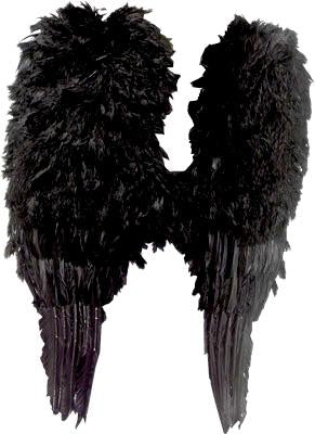 WINGS FEATHER LARGE BLACK