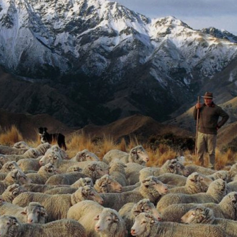 Why Choose Merino Wool?