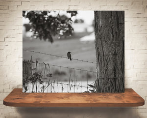 Bird on Fence Photograph Black White