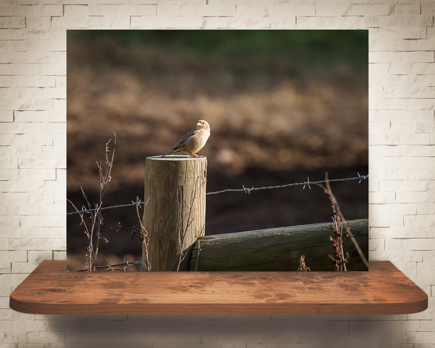 Bird on Fence Photograph