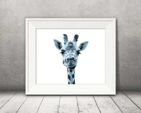 Giraffe Photograph Blue