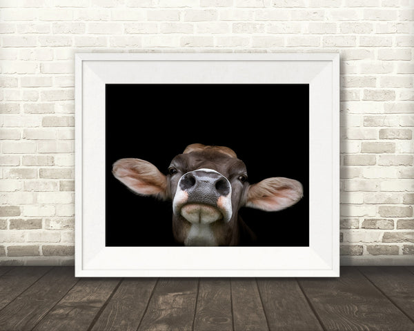 Brown Swiss Cow Photograph
