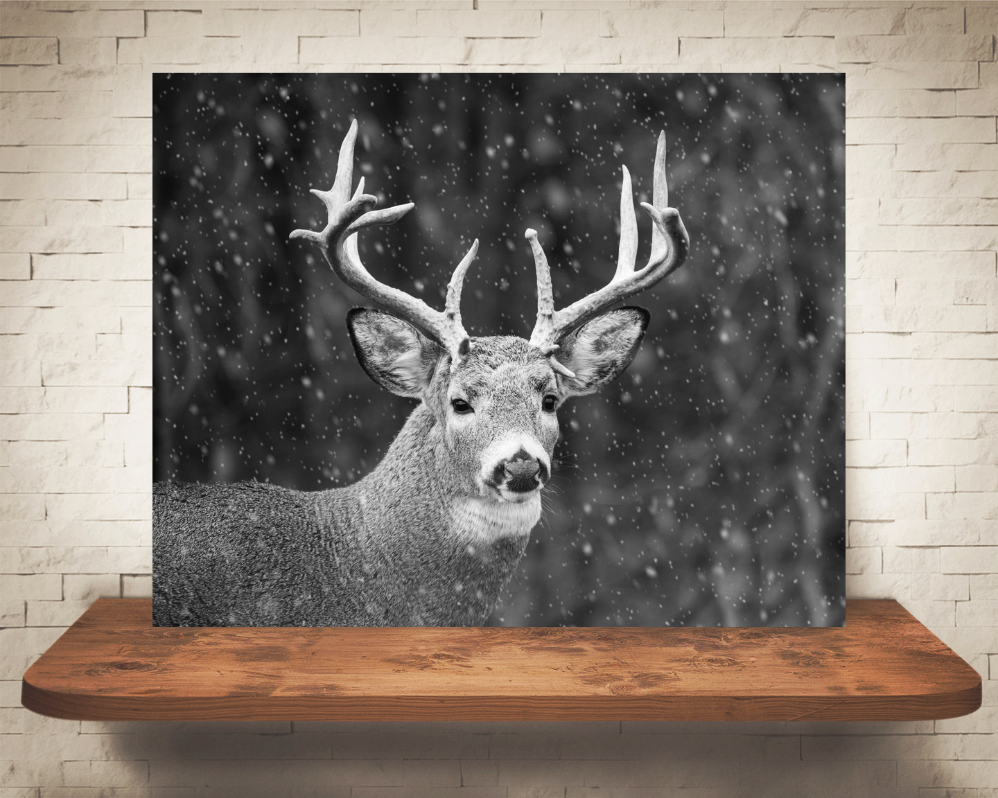 Deer Buck Photograph Black White Snow