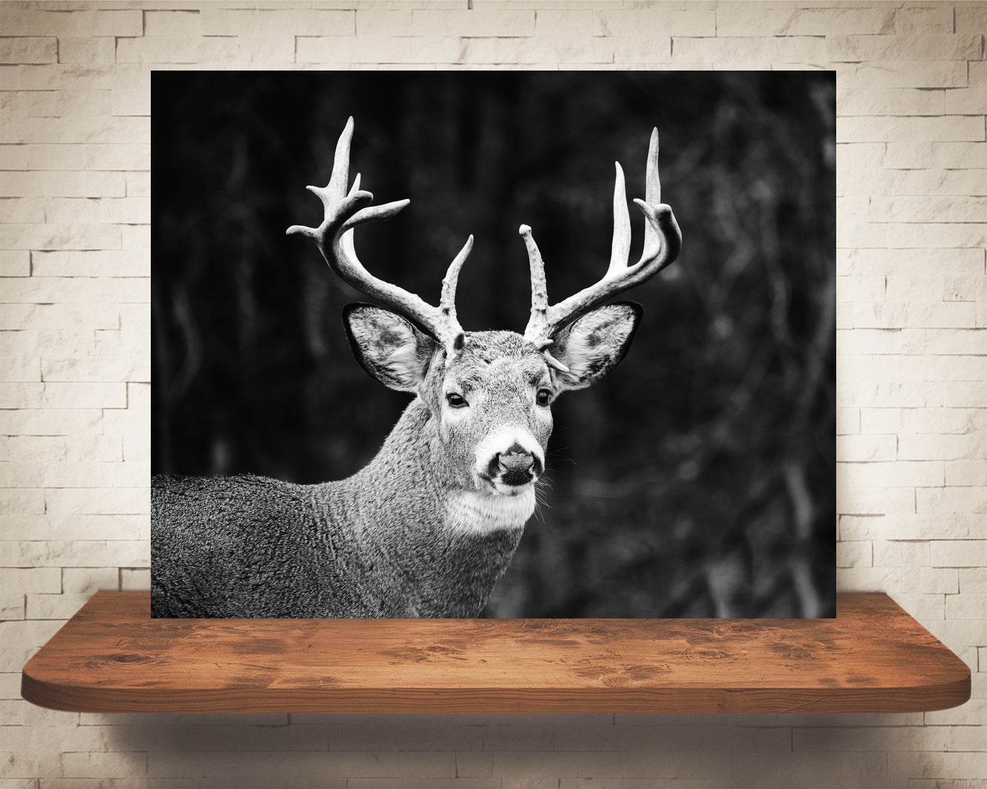 Deer Buck Photograph Black White