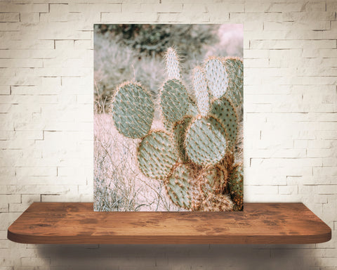 Prickly Pear Cactus Photograph Pink Tone