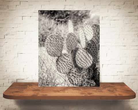 Prickly Pear Cactus Photograph Sepia