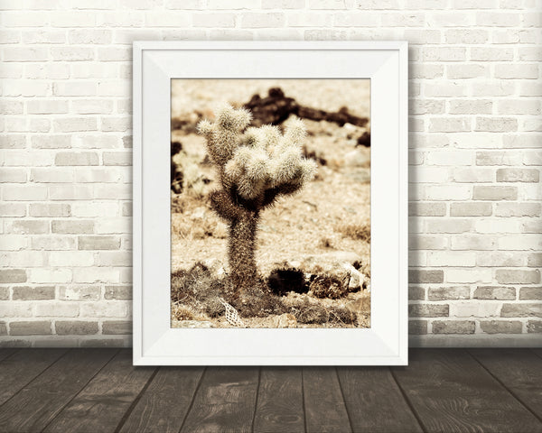 Teddy Bear Cactus Photograph