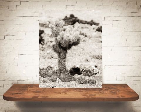 Teddy Bear Cactus Photograph Sepia