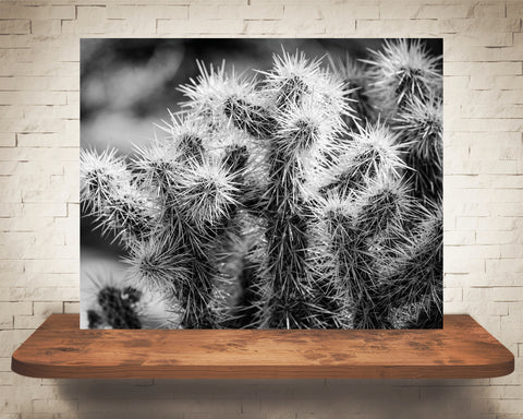Cactus Photograph Black White
