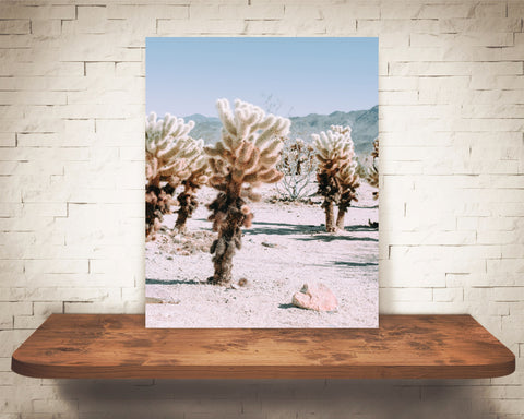 Teddy Bear Cholla Cactus Photograph