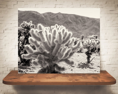 Teddy Bear Cholla Cactus Photograph Sepia