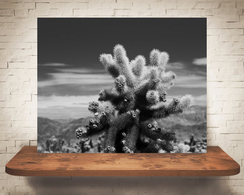 Teddy Bear Cholla Cactus Photograph Black White